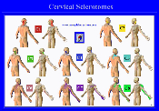 Cervical Sclerotome Wall Chart