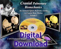Cranial Motion Vol. 2: Cranial Pulmonary Biomechanics - Download